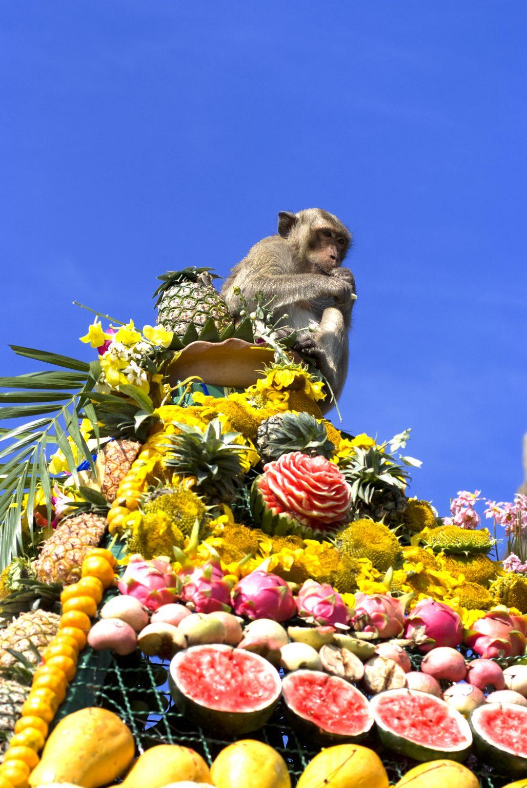 猴子自助餐節(Monkey Buffet Festival)是泰國華富里府(Lopburi Province)行之有年的節日(圖片來源:shutterstock)